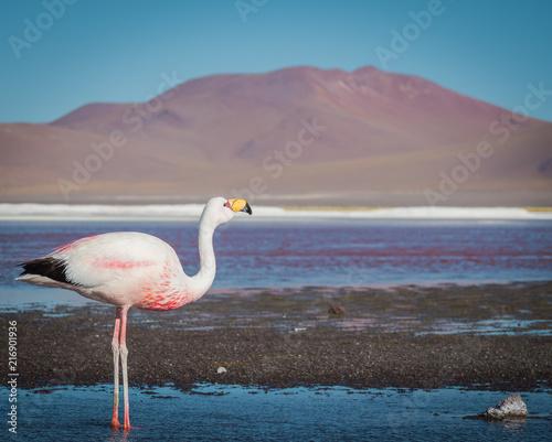Canvas Zwaan Flamingos 4