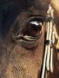 beautiful eye of  black stallion. close  up