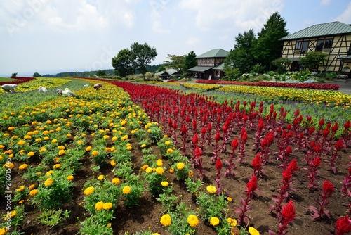 In de dag Tulpen 久住高原の花