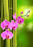 Pink purple orchids flowers on purple gradient with bokeh background. Vector illustration of realistic orchids flowers in branch isolated.