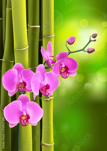 Pink purple orchids flowers on purple gradient with bokeh background. Vector illustration of realistic orchids flowers in branch isolated. - 216927389