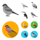 Gull, toucan and other species. Birds set collection icons in monochrome,flat style vector symbol stock illustration web.