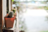 Plant Cactus Houseplant Nature Concept, bokeh background , Home indoor plants.