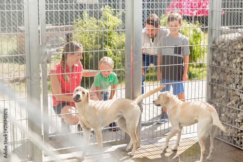 Leinwandbild Motiv Family getting to know two dogs in animal shelter