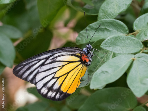 Foto Spatwand Vlinder Tropical Butterfly resting on Leaf and Flower