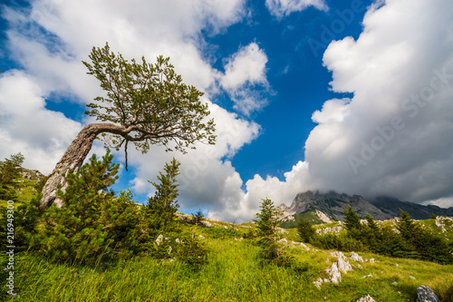 Mountain landscape on sunny day in summer.  - 216949300