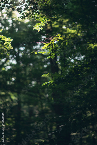 Foto Murales Leaves of trees in sunlight in forest.