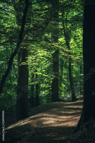 Path in sunny summer forest.