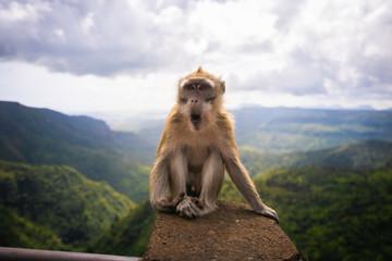 Affe auf Mauritius © Isabel