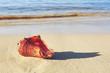 Quadro Sea shell on tropical beach. Summer sea landscape.
