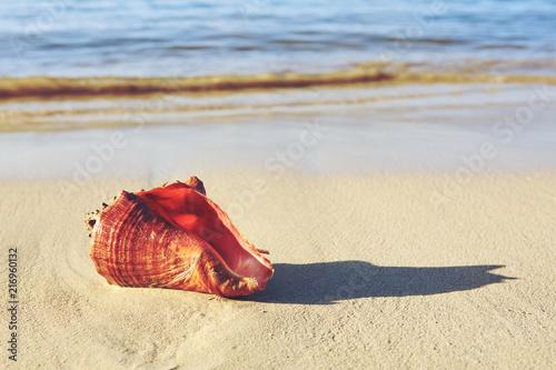 Sea shell on tropical beach. Summer sea landscape.