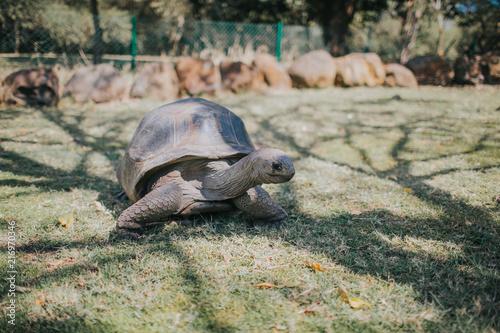 Foto Spatwand Schildpad Schildkröte