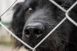 Black dog, a dog of dark color, mixed breed. In the open-air cage, close-up