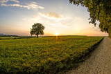 sunset in summertime with tree - 216987327
