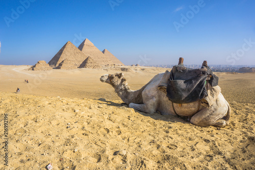 Canvas Kameel The Great Pyramid and Sphinx