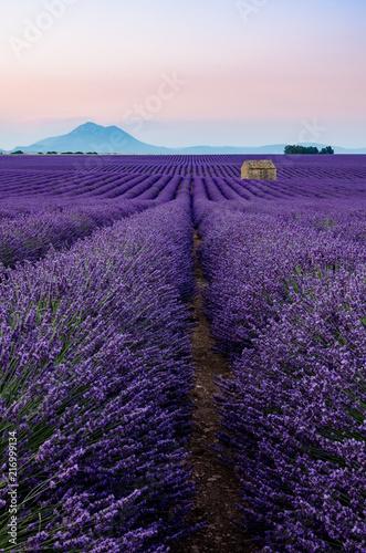 Foto Spatwand Lavendel Plateau de Valensole 2018