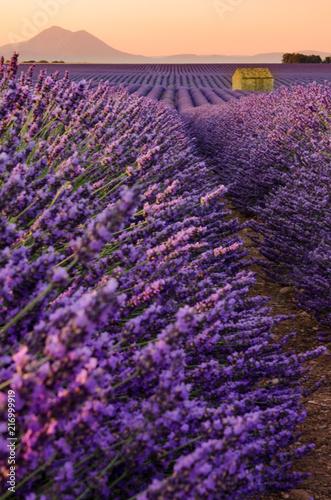 Canvas Lavendel Plateau de Valensole 2018