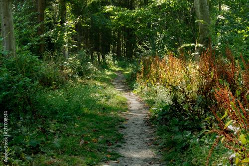 Fotobehang Weg in bos chemin en forêts