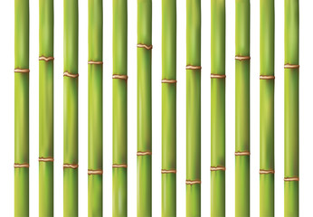 bamboo background design © RATOCA