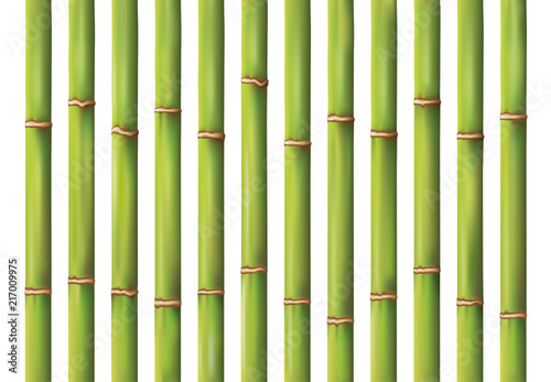 bamboo background design