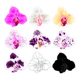 Orchid Phalaenopsis various colours natural, outline, silhouette,flower three on a white background vintage vector editable illustration hand draw