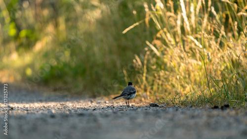 Foto Murales Back of a beautiful bird
