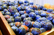 Crop of plums in boxes. Plum background. Beautiful blue plums close-up. - 217037942