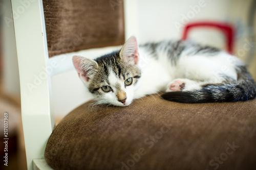 Foto Spatwand Kat süße Babykatze