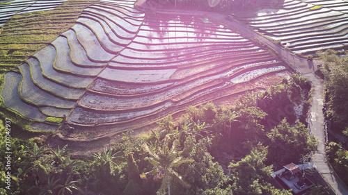 Widok z lotu ptaka piękni ryżowi tarasy przy zmierzchem, Bali.