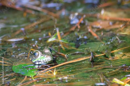 Foto Spatwand Kikker Frog
