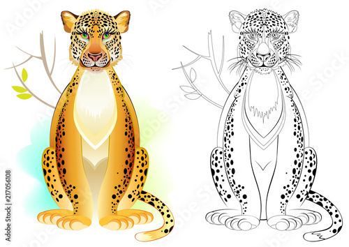 Fototapeta Colorful and black and white pattern for coloring. Drawing of cute leopard. Worksheet for children and adults. Vector image.