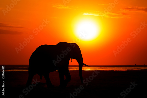 Canvas Oranje eclat African Elephant