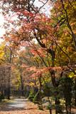 秋の公園 - 217074151