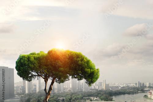 Fototapeta Eco green concept