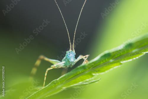 Foto Murales Cricket