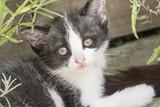 Gray-white kitten outdoors.