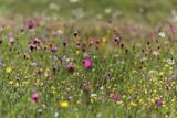 Blumenwiese im Sommer, Bayern, Deutschland