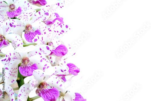 Thai Orchids - 217109987
