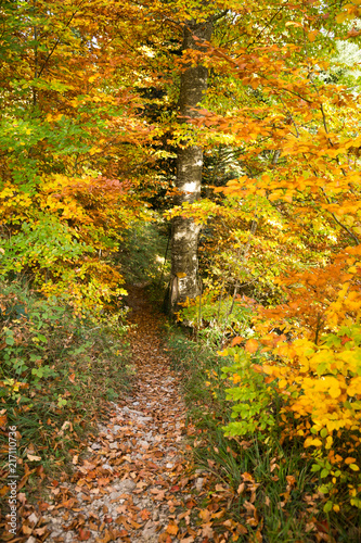 Foto Spatwand Oranje Yellow Path Sign Hand Painted on a Tree in Golden Foliage Forest .