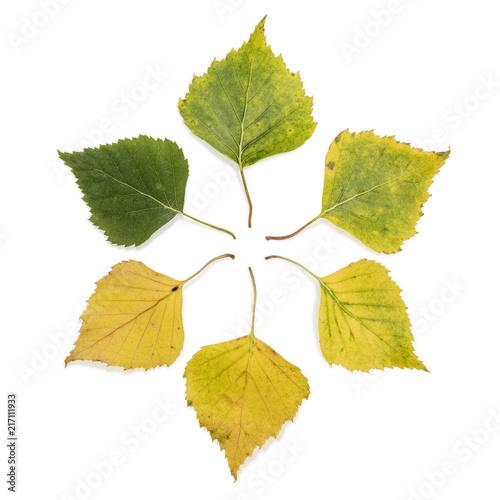 Birch Leaves Hexagon - 217111933
