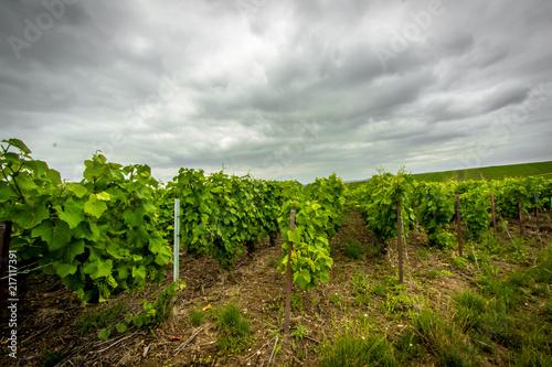Foto Spatwand Wijngaard Champagne region