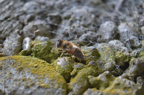 In de dag Bee Biene auf Beton