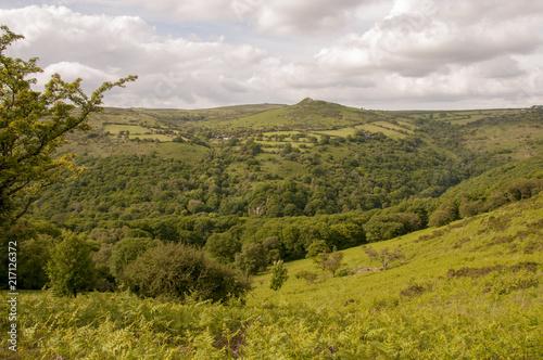 Foto Spatwand Honing Dartmoor view