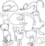 Set of the most characteristic poses of domestic cats