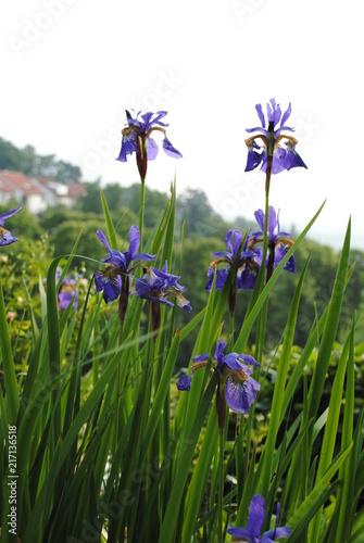 Aluminium Iris Blumen und Bienen