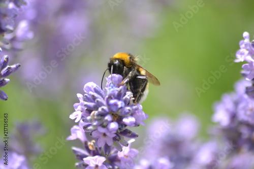 Foto Murales Blumen und Bienen