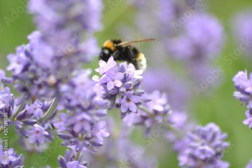 In de dag Bee Blumen und Bienen