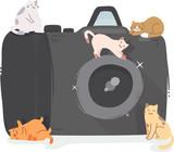 Cats Camera Illustration