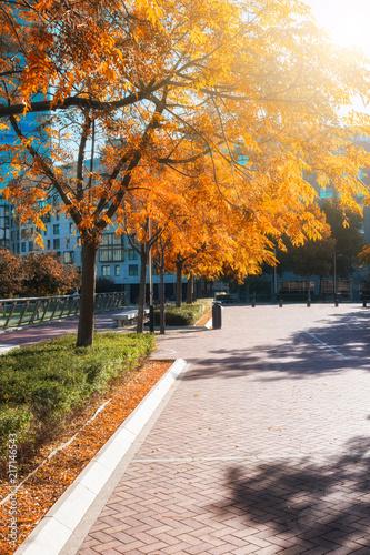 Fotobehang Herfst The autumn colors city park
