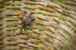the frog climbs up the wicker basket